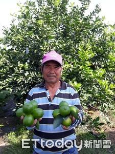 一年遇3次大颱風檸檬全毀 農友沒被擊倒