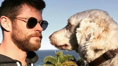 愛家更愛動物!雷神克里斯漢斯沃「家裡有如動物園」 最喜歡跟愛犬玩互瞪遊戲