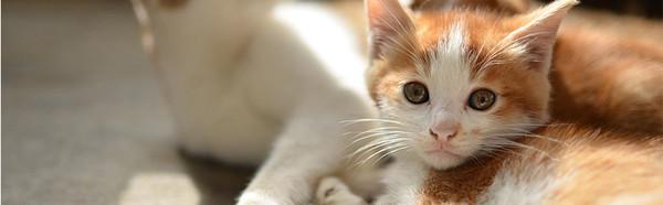 台灣之心愛護動物協會