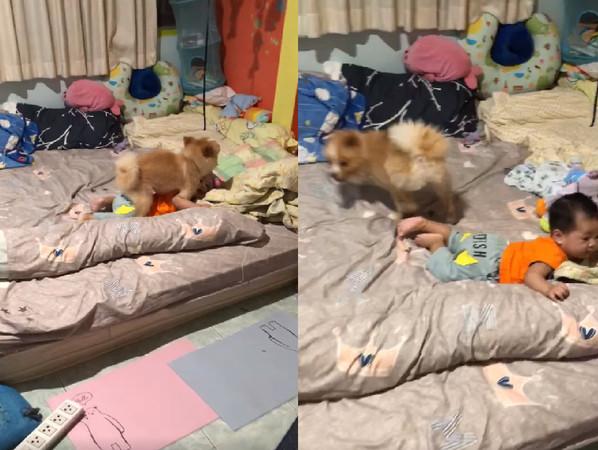 媽媽救我!寶寶遭小色狗「強壓晃動」 4秒短片崩潰上百萬人