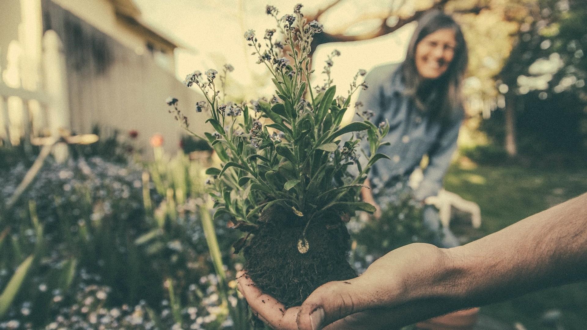 ▲園藝,種植,園丁。(圖/取自免費圖庫Pixabay)