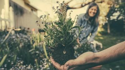憂鬱病友斷藥後「把手弄髒」種花去 花開好...人也會笑了
