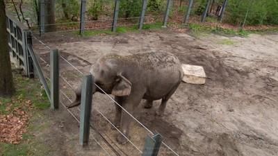 10年沒看過「自己人」 孤寂大象獨困動物園 70萬人連署放牠回家吧