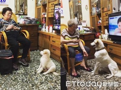 3年祖孫情!嬤黑髮→白髮把小狗養大