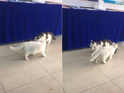 2貓叼走異色小喵 網:沒抱錯嗎