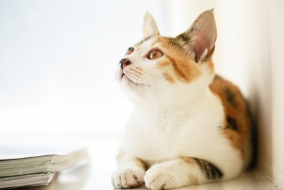 不想去討厭的醫院!貓咪會忍痛「裝健康」 主人須多加注意日常行為