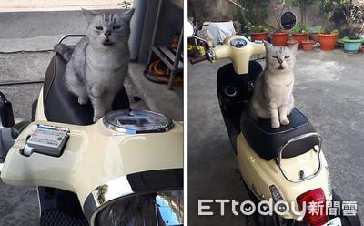 貓咪霸佔機車 萌喊一聲讓網淪陷