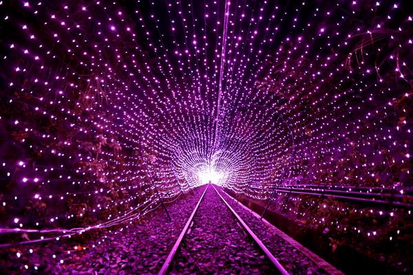 七夕情人節約會必去!特搜全台4條浪漫燈海隧道 100米金色燈海夢幻又好拍