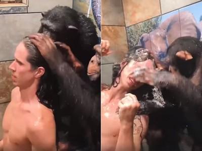 黑猩猩幫主人洗頭「狂巴頭把玩」