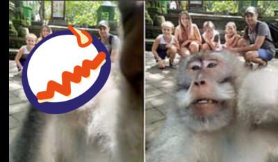 調皮猴比出「超嗆pose」亂入全家福照!