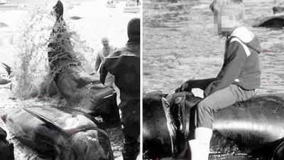 燦笑和「鯨魚斷頭屍」合影!北歐島民:傳統比生態重要 血色海灣年年上演