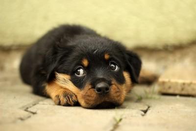 為了更可愛 狗眼長肌肉進化了