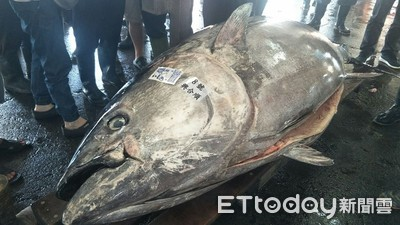 讓300噸黑鮪配額給日本遭疑 漁業署回應了