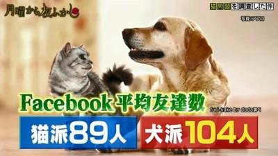 貓狗大不同! 寵物反映「飼主特質」 狗派容易幸福、貓派智商較高