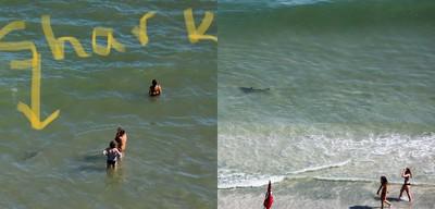 海灘勝地驚見鯊魚 遊客抱小孩嚇壞