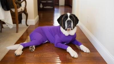 笑慘!汪星人穿「防掉毛連體衣」像顆胖球 求狗狗心理陰影面積
