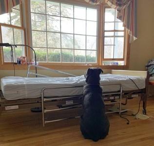 空病床旁乖坐 黑犬傻等過世主人…