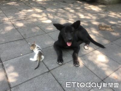 浪汪叼失親幼貓舔臉頰:我保護你