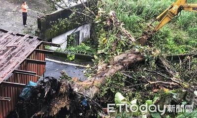 基隆老榕樹倒塌 8民宅無法通行