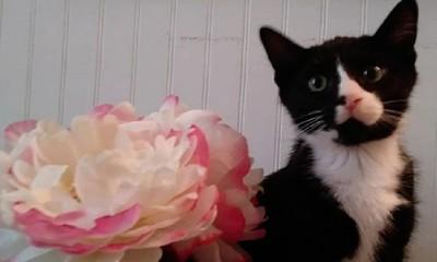愛貓鑽洗衣機1小時 肺水腫命危