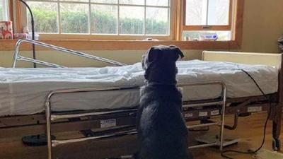 嗅聞病床守7天!忠狗不明白主人已病逝 呆坐病房背影哀戚