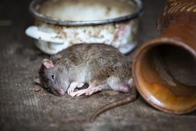 英國女王被鼠嚇到 變異物種肆虐