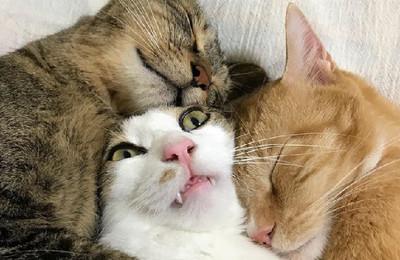 萌喵被哥哥抱著睡變「厭世夾心」