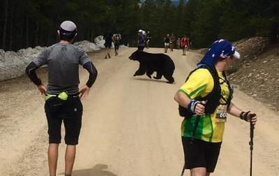 黑熊亂入一起跑 跑者嚇到不敢動