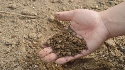 月底「吃土」不心酸!研究證實土壤包覆脂肪 瘦身成效勝過減肥藥