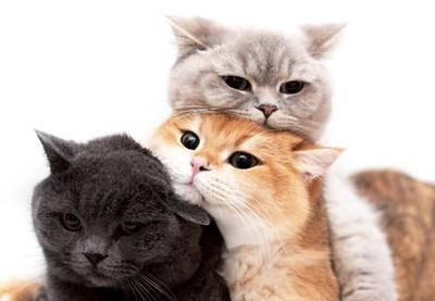 貓界丸子三兄弟!每天玩招牌疊疊樂