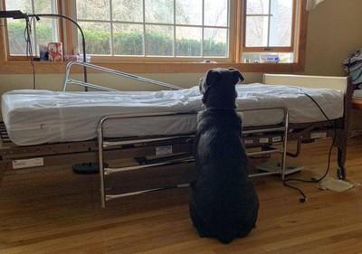 爸爸呢?汪守病床等癌逝主人惹鼻酸