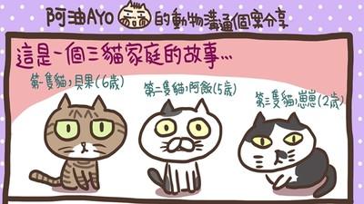 一家三貓鬧成八點檔! 每隻個性需求不同「你肯陪伴」才能拉回臭脾氣
