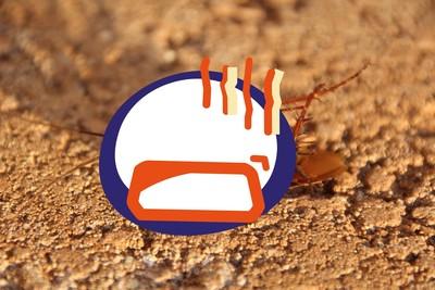蟑螂對殺蟲劑產生抗藥性 一代增6倍