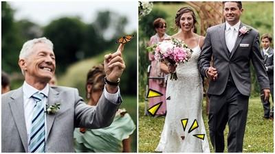 感人!婚禮「野放蝴蝶」紀念去世姊姊 一隻停在父親手上遲遲不肯飛