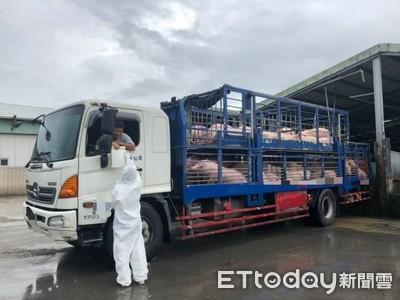活豬運輸車強制加裝GPS  動保處加強稽查