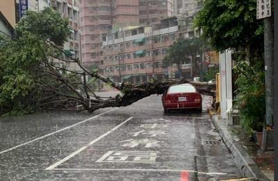 雨彈狂炸 三民區樹倒壓車