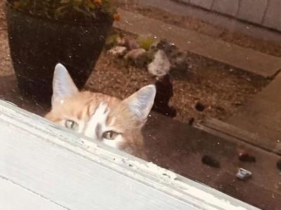 萌貓趴窗求開門 近看告示笑歪