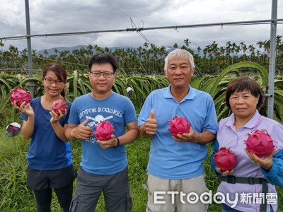 種有機紅龍果 「ㄚ霞紅龍果」每公斤曾達460元