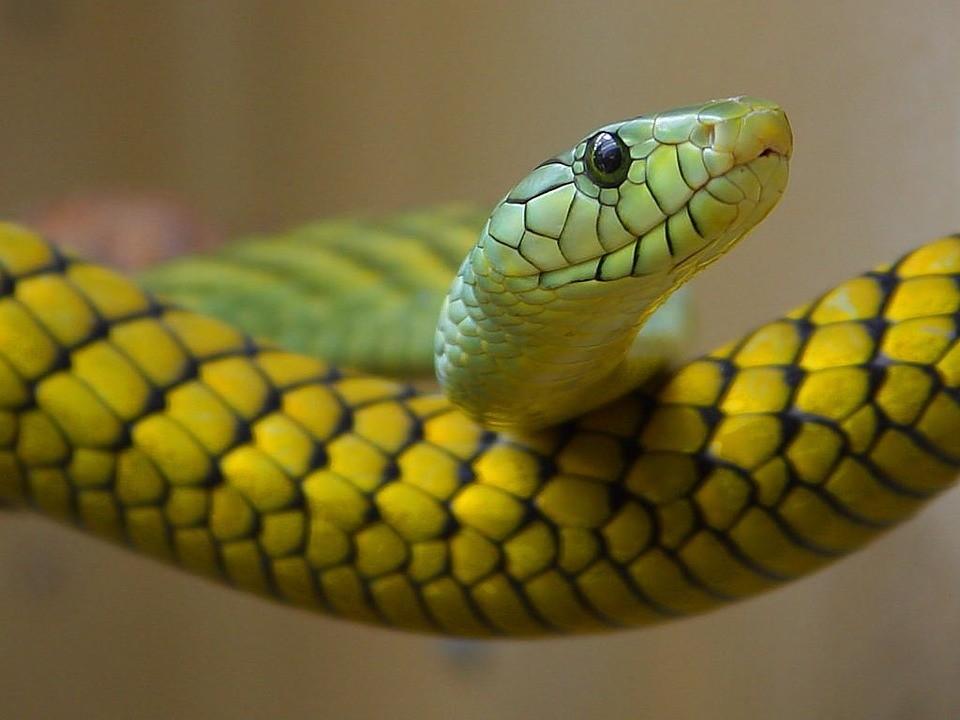 ▲▼蛇。(示意圖/取自免費圖庫Pixabay)