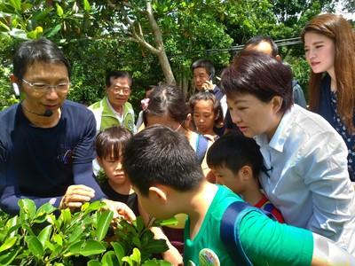 大坑逾3百隻紫斑蝶 盧秀燕:歡迎賞蝶