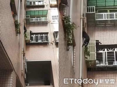 黑狗被飼主騰空「高掛3樓窗外」