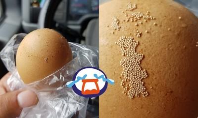 蛋殼黏整片小米!養雞人曝:不是蟲卵