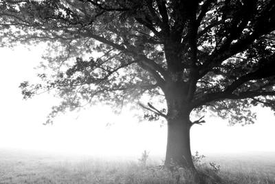 彰化魔樹3個月吊死2人被挖除!村民拒送肉粽再爆慘劇