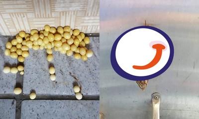 家門口「一堆橢圓黃豆」 他曝卵主真面目