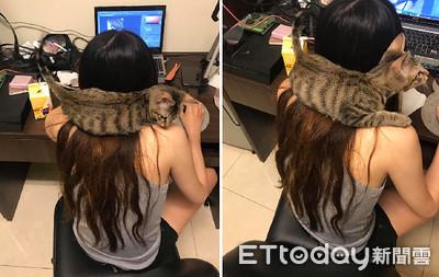 「貓咪頸枕」自帶呼嚕音效幫按摩