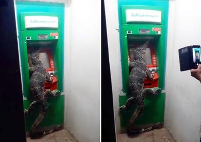 到ATM領錢 驚見2米五爪金龍