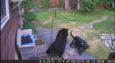 黑熊闖後院 小黑狗英勇把牠擊退