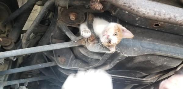 小浪喵困車底跟著飛駛2小時 車主不惜「拆老婆」救牠