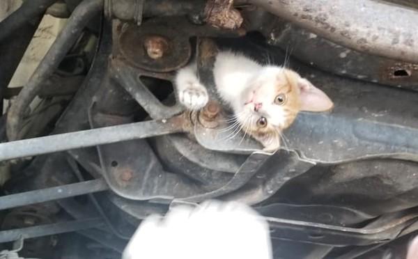 小貓卡車底「露頭又伸手」!駕駛開50公里一看傻眼 秒衝修車廠:快救牠