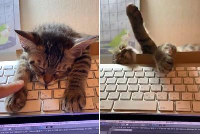 萌喵趴筆電睡到併軌 結局超奇葩